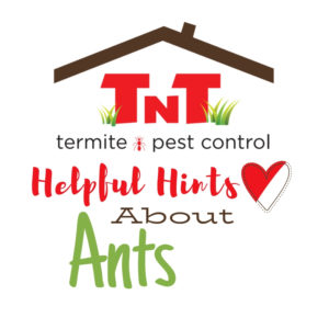 Read more about the article Ants